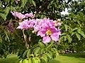 2142jfPink flowers Clark Freeport Zonefvf 06.JPG