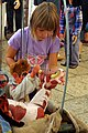 4.9.15 Pisek Puppet and Beer Festivals 137 (21152452495).jpg