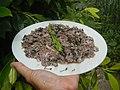 4087Ants Common houseflies foods delicacies of Bulacan 20.jpg