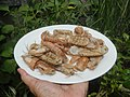 4300Ants of the Philippines Common houseflies 04.jpg