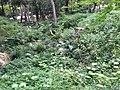 5 Chome Jindaiji Motomachi, Chōfu-shi, Tōkyō-to 182-0017, Japan - panoramio (12).jpg