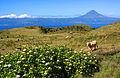 Açores 2010-07-19 (5046777538).jpg