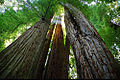 A066, Redwoods National Park, California, USA, 2002.jpg
