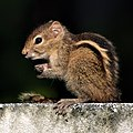 A baby squirrel 1.jpg