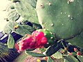 A cactus flower's beauty.jpg
