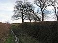 A muddy footpath - geograph.org.uk - 404077.jpg