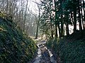 A view down the White Horse Trail, near Highway - geograph.org.uk - 1173306.jpg