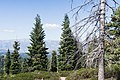 A view from road in Giant Sequoia National Monument.jpg