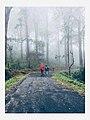 A walk through the nature.jpg