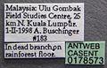 Acanthomyrmex ferox casent0178573 label 1.jpg