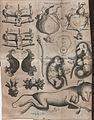 Acta Eruditorum - VII fisiologia, 1708 – BEIC 13371326.jpg
