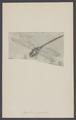 Aeschna - Print - Iconographia Zoologica - Special Collections University of Amsterdam - UBAINV0274 004 03 0040.tif