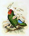 Agapornis pullarius 1869.jpg