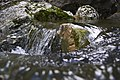 Agua de cerca - panoramio.jpg