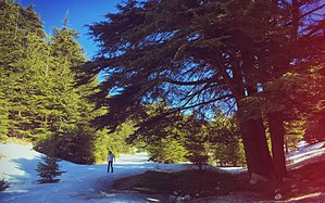 Ain Zhalta - Image: Ain Zhalta reserve in late winter