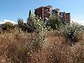 Alessandria (Piemonte, NW Italy) (31499888630).jpg