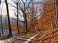 Altbergerwinter - panoramio.jpg