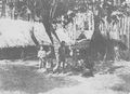 Amis (from a book published in 1901).png