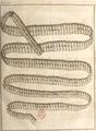 Andry - De la génération des vers (1741), planche p. 196.png