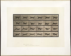 Animal locomotion. Plate 716 (Boston Public Library).jpg