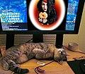 Animal testing 6.jpg