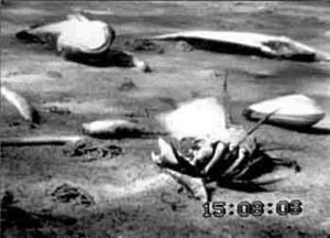 image of Anoxie dead zone