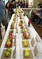 Apple Fest display tent (15410582058).jpg