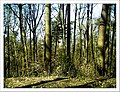April Hochschwarzwald Freiburg im Breisgau 1000 mtr - Mythos Black Forest Photography 2013 - panoramio.jpg