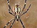 Arachnids ... (3882920877).jpg