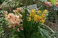 Arrangement d'orchidées.jpg