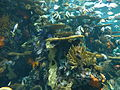 Artificial coral reef Ripley's Aquarium, Myrtle Beach 2.JPG