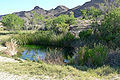 Ash Meadows Point of Rocks Springs 1.jpg