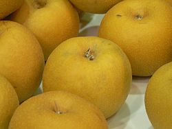 Asian.pear-Pyrus.pyrifolia-05.jpg