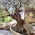 Aspros Potamos 720 55, Greece - panoramio (9).jpg