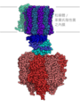 Atp synthase Traditional Chinese.png