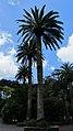 Auckland Zoo, North Island - panoramio (1).jpg