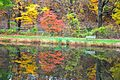 Autumn Colours 02.jpg