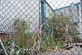 Autumn colours behind razor wire, Chillingham Rd, Heaton, Newcastle upon Tyne - geograph.org.uk - 1467287.jpg