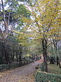 Autumn walk (6382411089).jpg