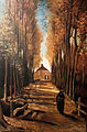 Avenue of Poplars in Autumn - My Dream.jpg