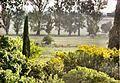 BOSQUES DE VIALE ZONA SUR - panoramio.jpg