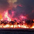 Backburn at Duck Lake Road -- Eyre Peninsula bushfire 2005.jpg