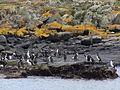 Bahía Ushuaia 278.JPG
