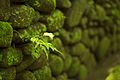 Bali 057 - Ubud - lone leaf.jpg