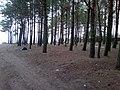 Baltiyskiy rayon, Konigsberg, Kaliningradskaya oblast', Russia - panoramio (38).jpg