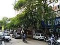 Bangalore street trees 3.jpg
