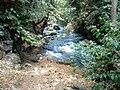 Banias River09.JPG