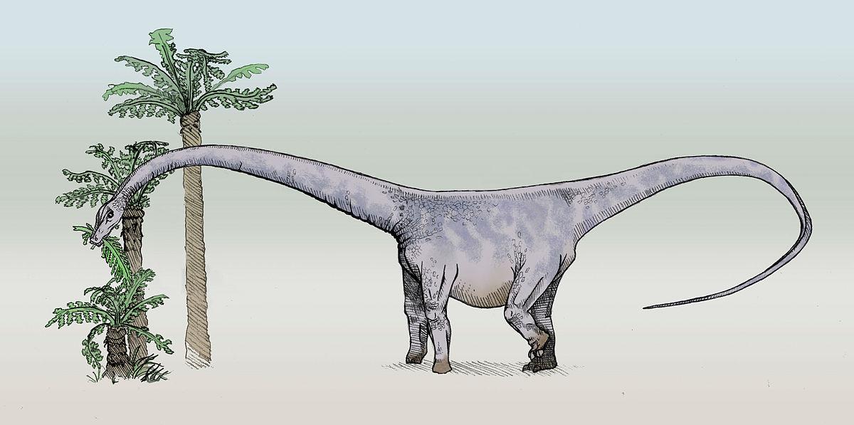 Картинки по запросу Барозавр