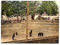 Bear pit in Berne around 1900.jpg