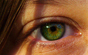Allele - Image: Beautiful green eye